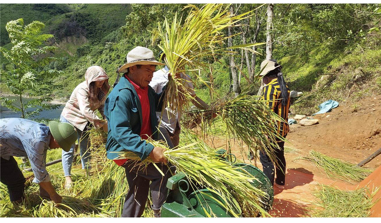 Ông Hồ Khiên, Trưởng bản Dộ-Tà Vờng đã gieo cấy thử nghiệm thành công mô hình lúa nước trên ruộng bậc thang.