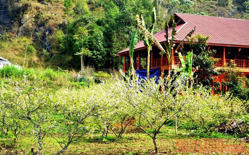 Với những ngôi nhà sàn truyền thống của người Tày và mận Tam Hoa nở trắng vào mùa xuân