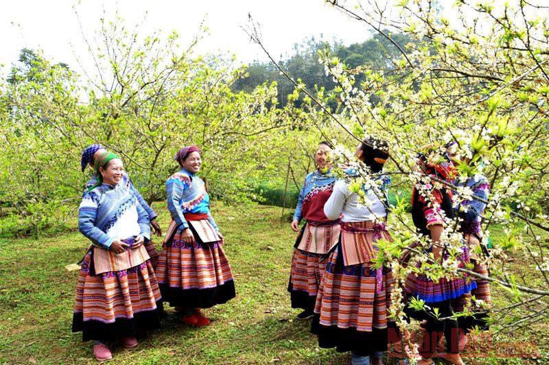 Thiếu nữ Mông trong vườn hoa Xuân