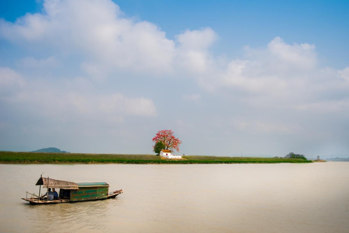 Tháng ba, hoa gạo khoe sắc thắm bên bờ sông Thương 4