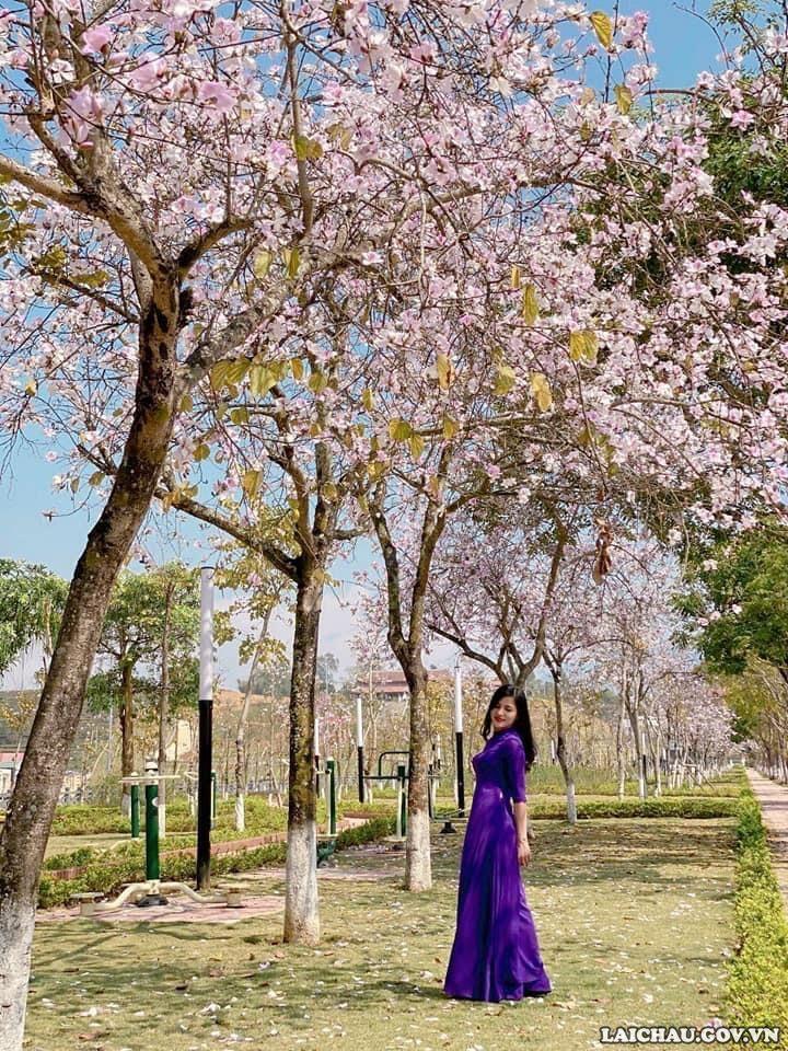 Vào mỗi mùa hoa ban nở rộ, rất nhiều người đã đến chiêm ngưỡng, chụp ảnh cùng hoa ban