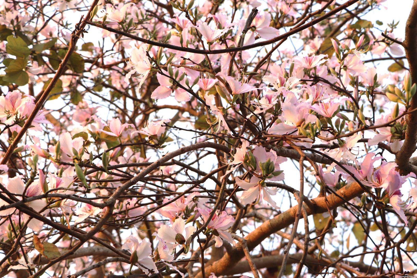Vào mùa đông cây trút lá, đợi xuân sang ấm áp đâm chồi nảy lộc