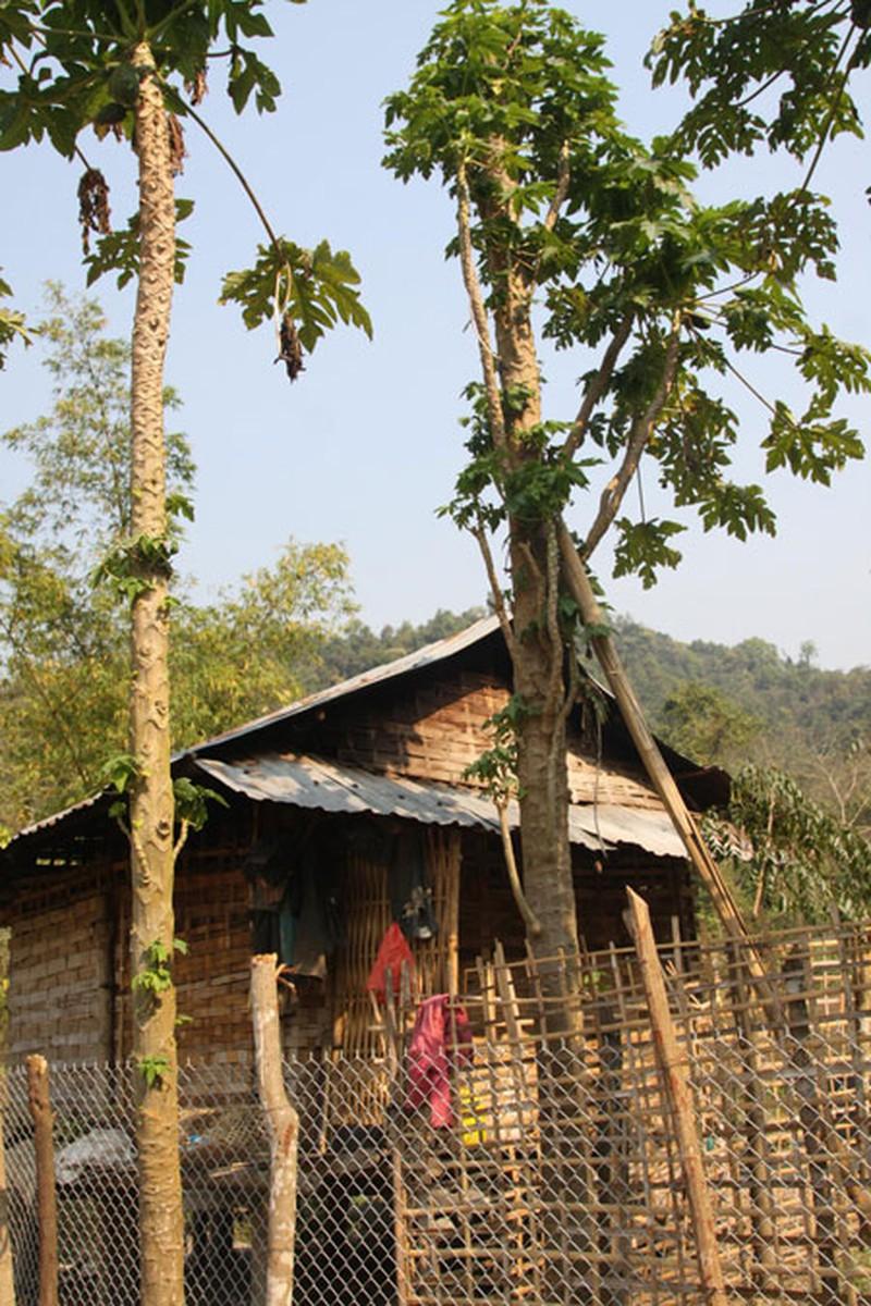 Trước đây, nhà khá nhất bản Nậm Củm chỉ có cây đu đủ. Khi nào cây đu đủ ra quả thì đều có người ở nhà để trông vì sợ bị hái trộm (Ảnh chụp năm 2014)
