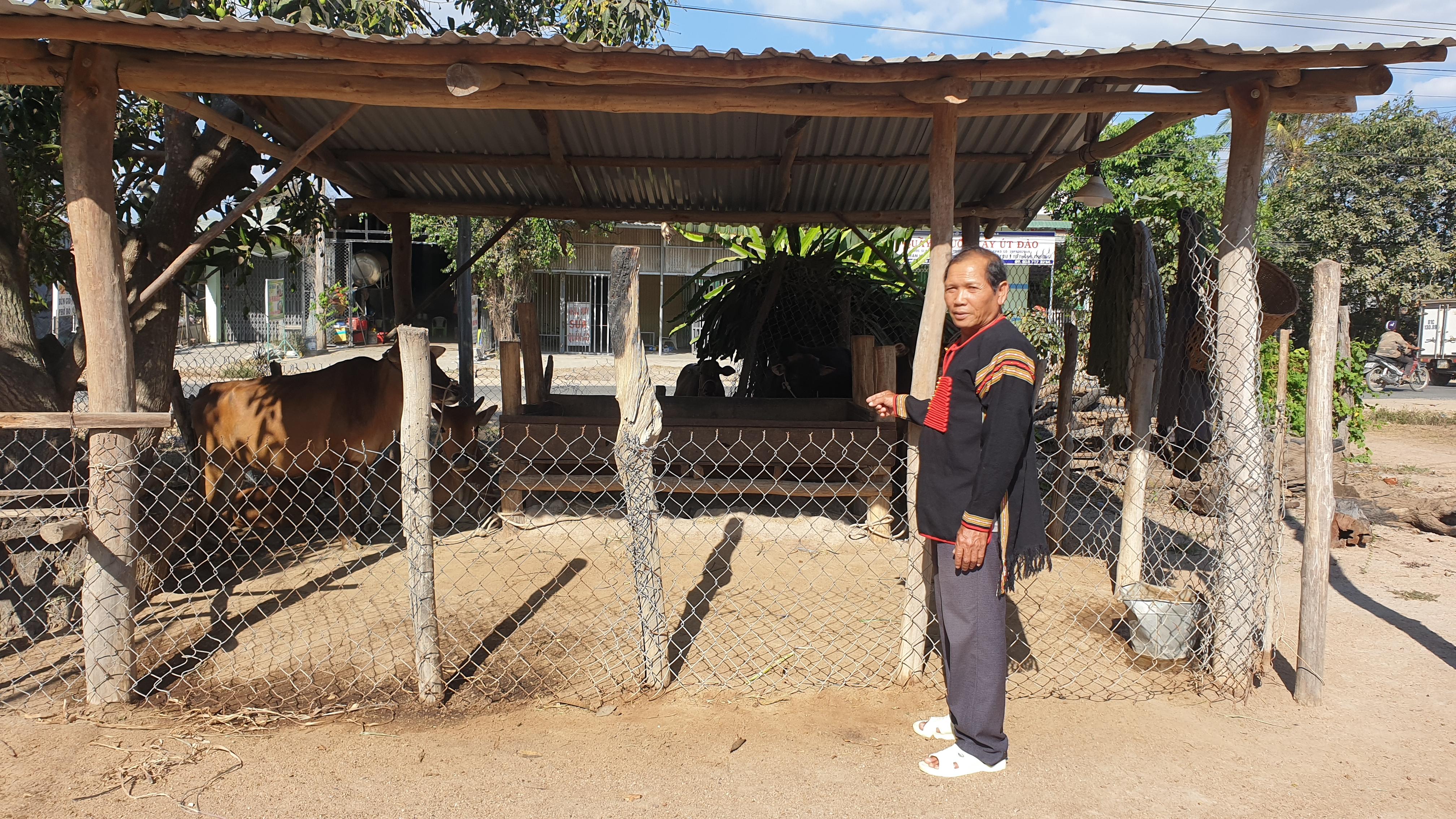 Già làng Ksor Ry gương mẫu di dời chuồng trại ra xa nhà ở để người dân trong buôn thực hiện theo.
