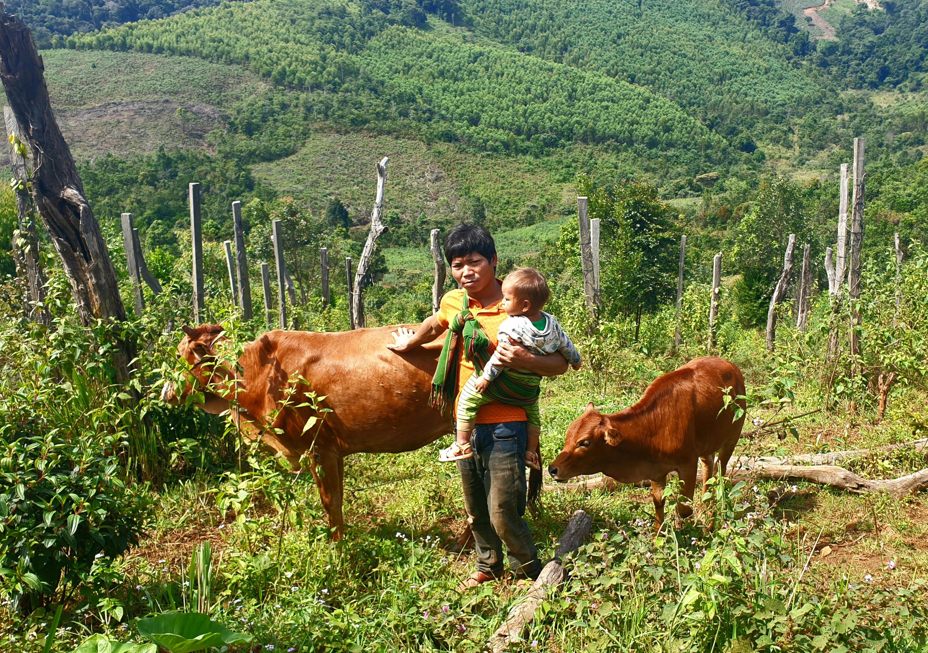 Gia đình anh Cher được Nhà nước hỗ trợ bò giống và hỗ trợ nguồn vốn phát triển sản xuất, nhờ đó đã vươn lên thoát nghèo.