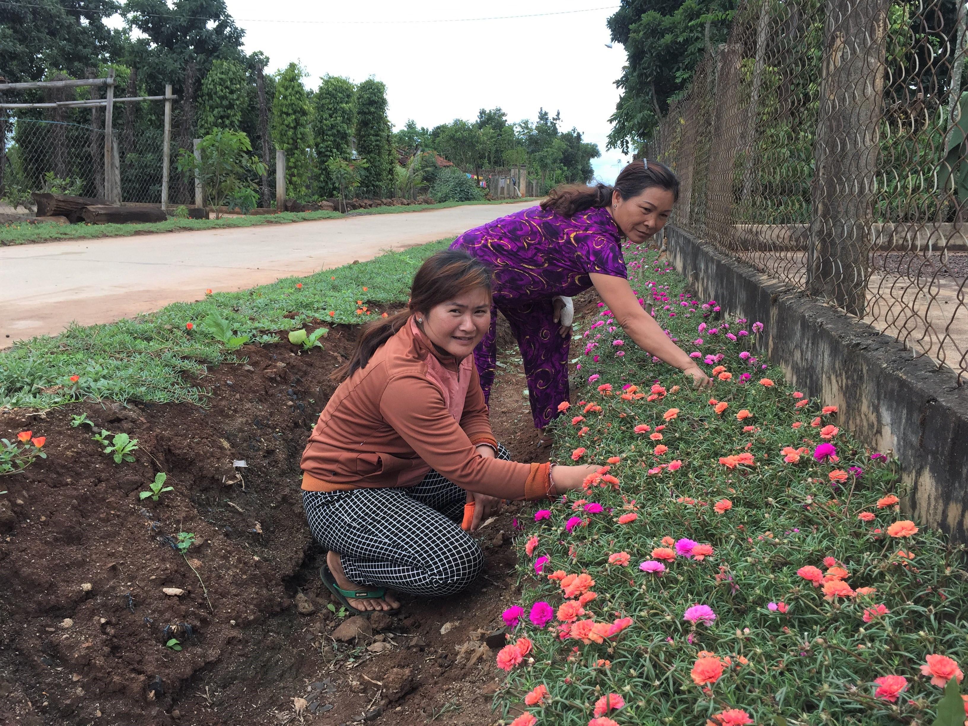 Phụ nữ xã Ea M'nang chăm sóc hoa mười giờ