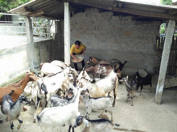 Gia đình giáo dân Nguyễn Thị Tài - một trong những hộ giáo dân tiêu biểu làm kinh tế giỏi của giáo họ Đồng Trấm, xã Hùng Sơn