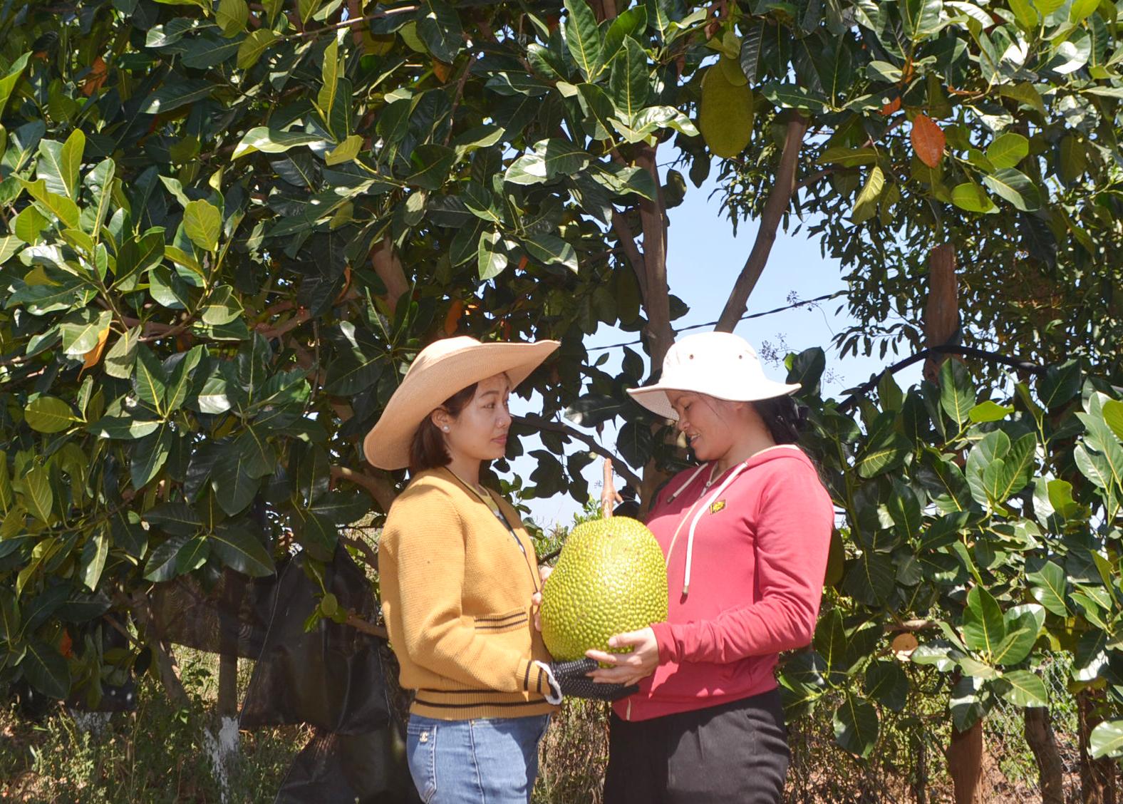 Chị Trần Thị Mai giới thiệu sản phẩm mít vườn với du khách tham quan.