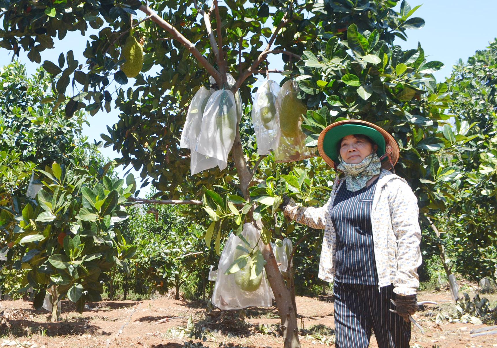 Chị Võ Thị Thu Hằng bên vườn cây ăn quả của gia đình