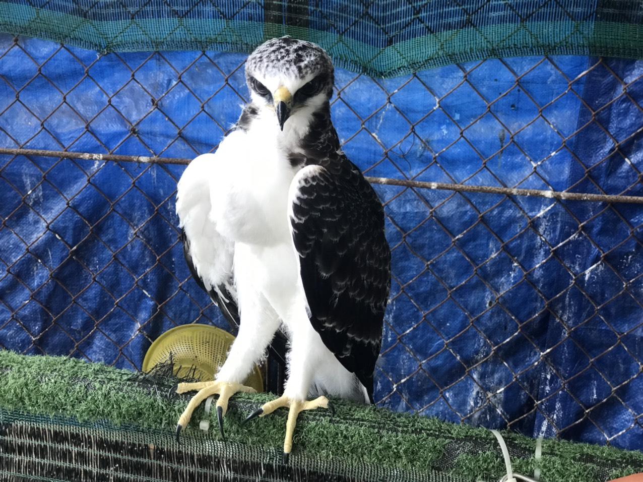 Một cá thể chim hoang dã được giải cứu tại Tây Ninh ngày 6/4