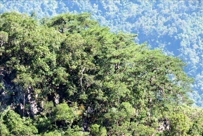 Khu bảo tồn thiên nhiên Pù Luông. Ảnh: TTXVN phát