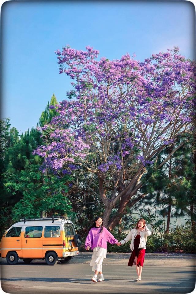 Đà Lạt mùa phượng tím, cảnh đẹp lãng mạn tựa cổ tích 10