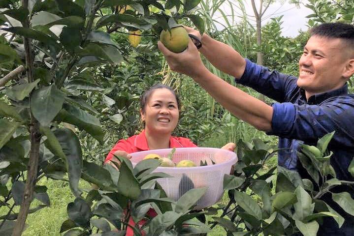 Với việc đẩy mạnh liên kết trong sản xuất, các sản phẩm nông nghiệp của người nông dân Tuyên Quang ngày càng đảm bảo chất lượng, thu hút người tiêu dùng