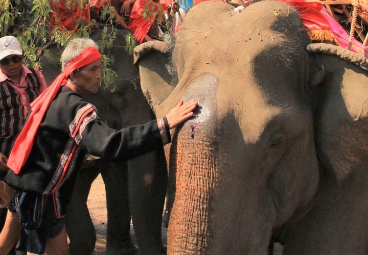 Trong Lễ cúng sức khỏe cho voi, già làng bôi tiết, tưới rượu lên đầu voi để cầu chúc cho voi khỏe mạnh.