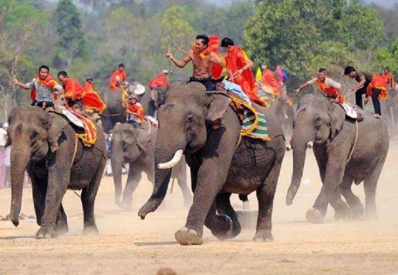 Những con voi dũng mãnh của Buôn Đôn đang trên trên đường đua.