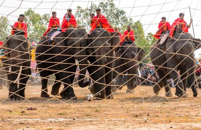 Voi thi đá bóng trong Lễ hội đua voi