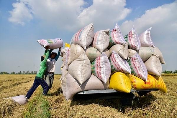 Mô hình sản xuất nông nghiệp đang dịch chuyển sang kinh tế nông nghiệp quy mô lớn tại Kiên Giang thu hút nhiều doanh nghiệp tham gia. Ảnh: dangcongsan.vn