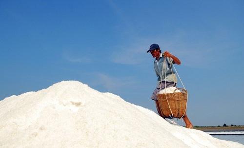 Diêm dân Ba Tri (Bến Tre) thu hoạch muối
