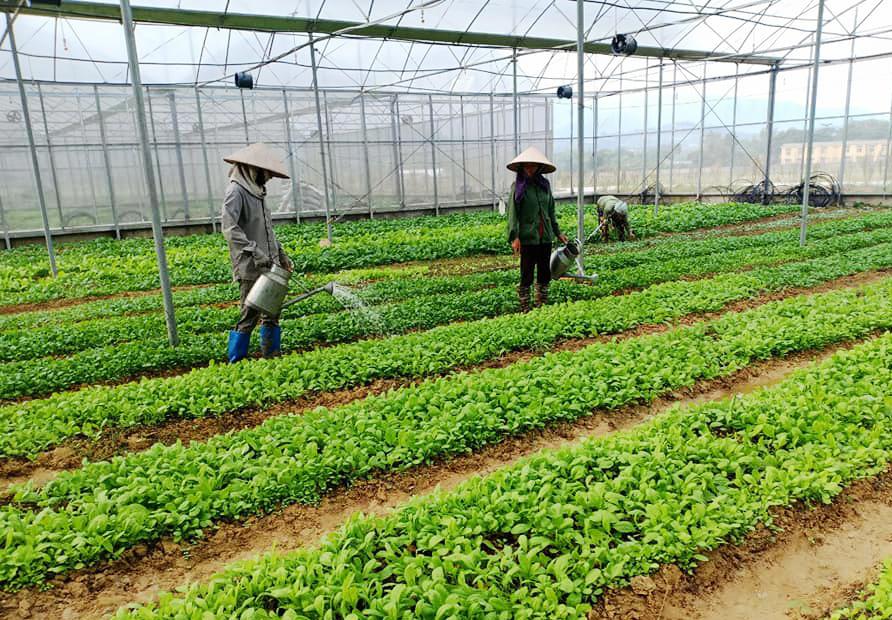 Vườn rau công nghệ cao của dự án Happy Farm