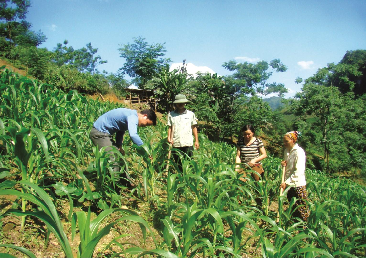 Đồng bào DTTS huyện vùng cao Pắc Nặm (Bắc Kạn) thay đổi cơ cấu cây trồng bằng những giống mới, mang lại hiệu quả kinh tế cao.