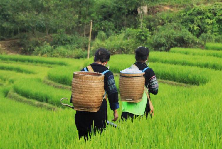 QKNX được xây dựng với mục đích hỗ trợ nông dân và nông dân trẻ Việt Nam khởi nghiệp, tái khởi nghiệp theo định hướng mô hình chuỗi giá trị nông nghiệp công nghệ cao
