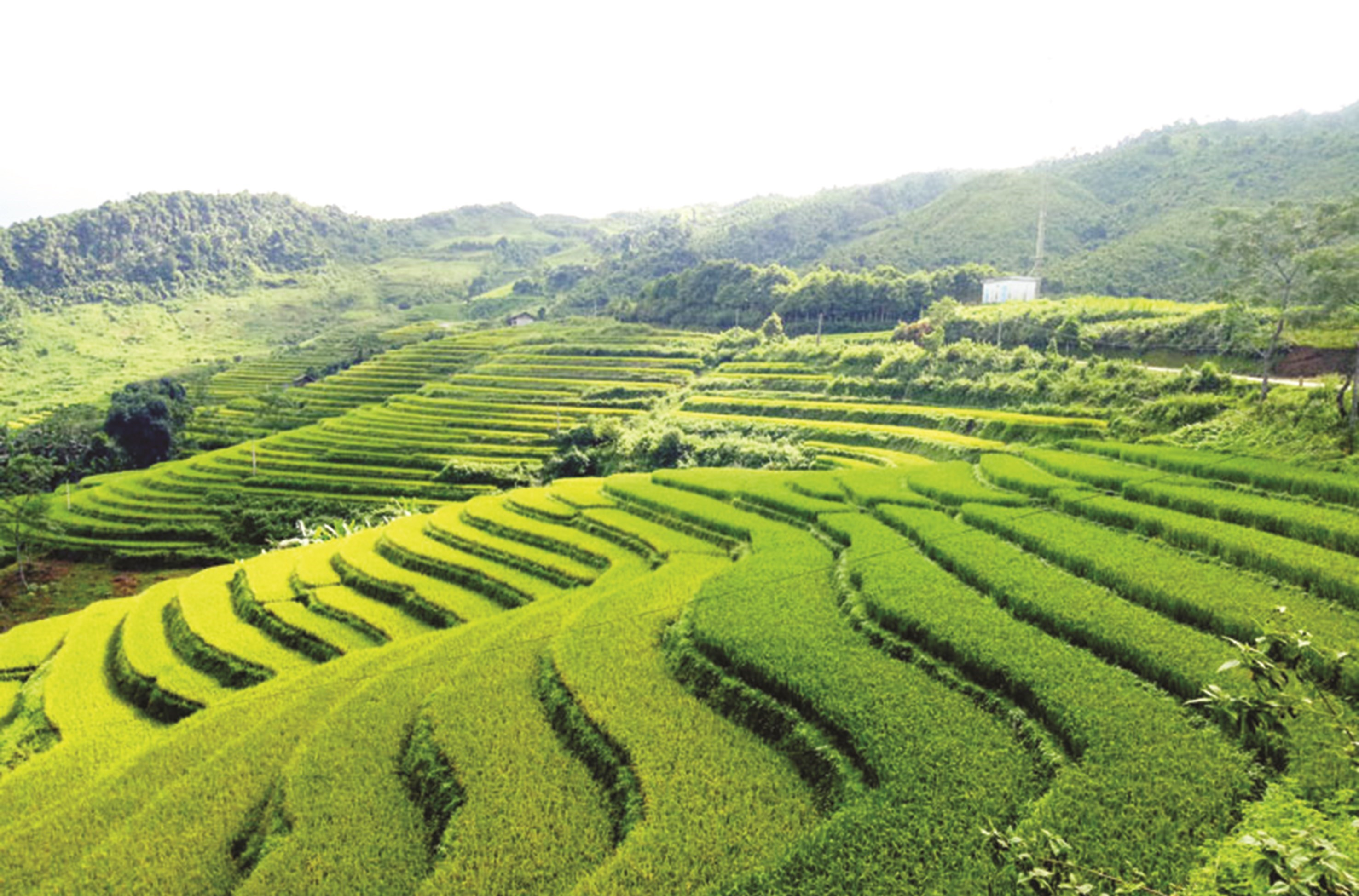 Vẻ đẹp ruộng bậc thang ở thôn Lủng Phặc, xã Cổ Linh (Pác Nặm).