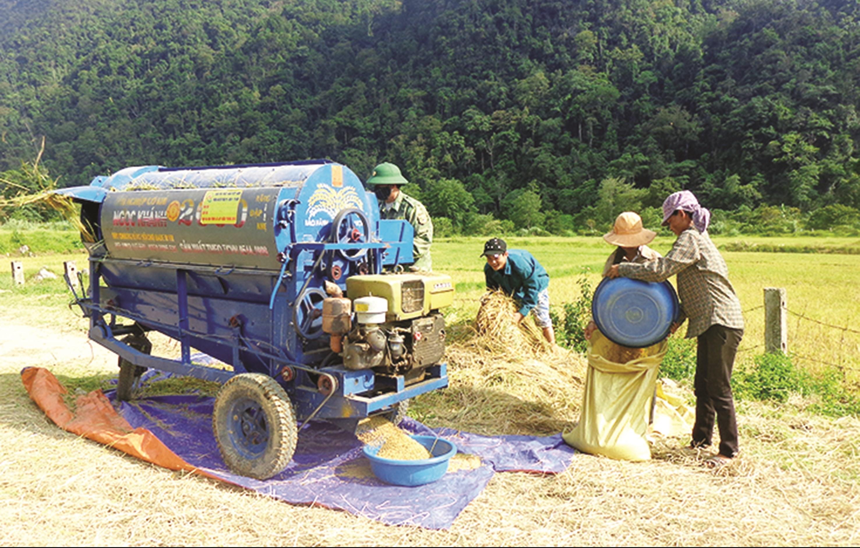 Bộ đội Biên phòng giúp đồng bào Chứt ở Thượng Hóa, Minh Hóa thu hoạch lúa nước