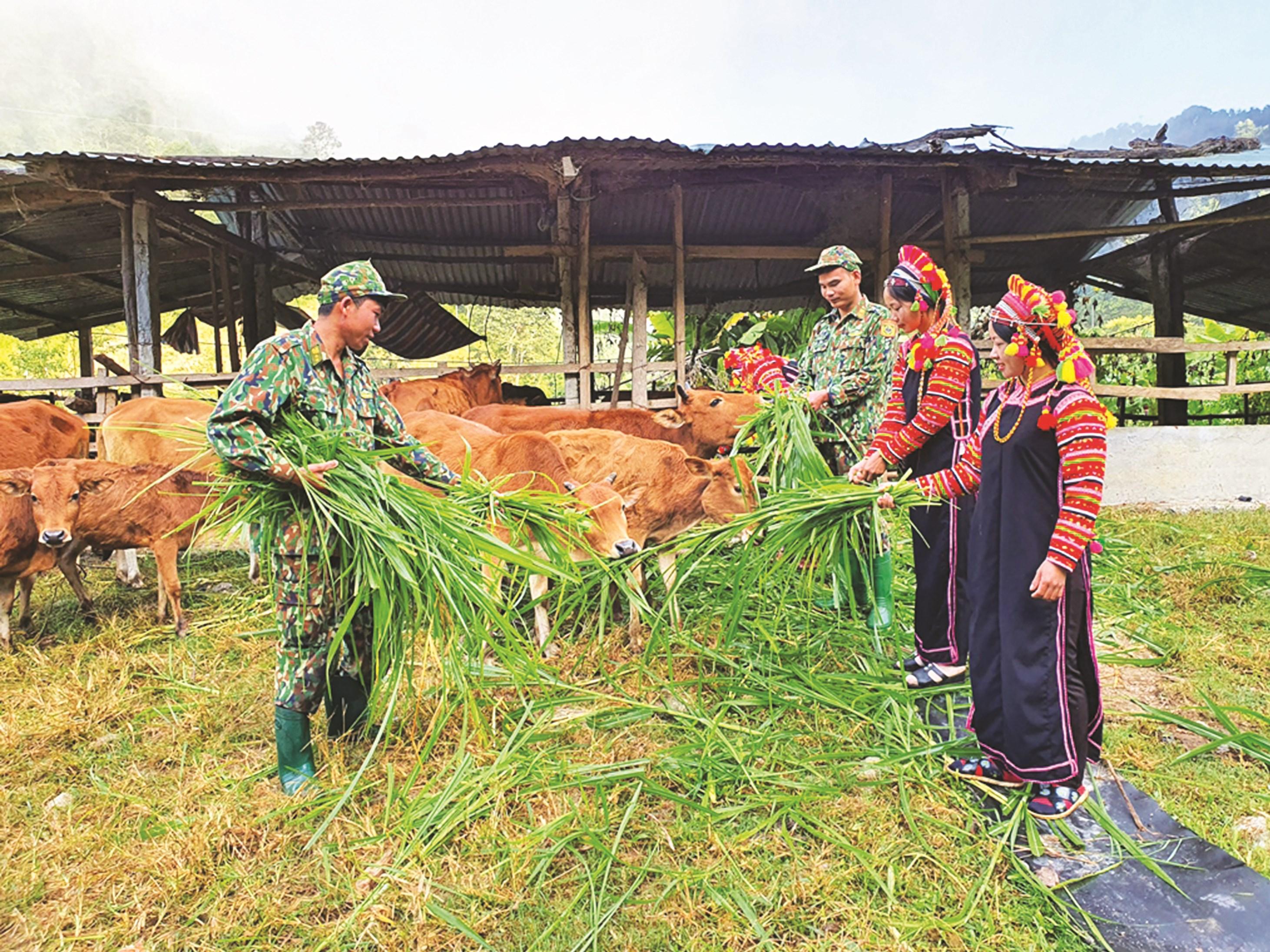 Bộ đội Biên phòng tỉnh Lai Châu hướng dẫn đồng bào La Hủ kỹ thuật chăn nuôi bò. Ảnh Phạm Kiên