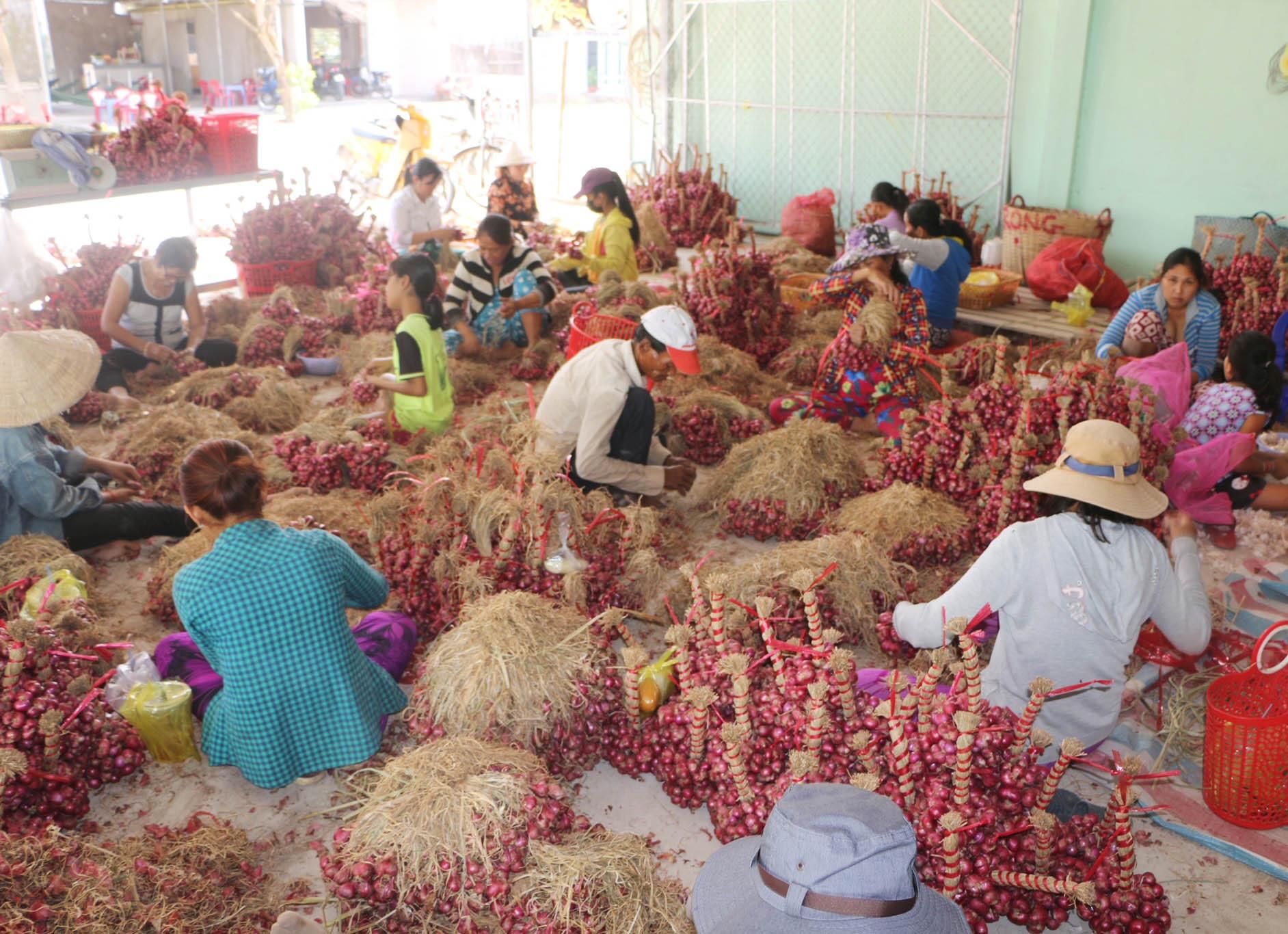 Người dân Vĩnh Châu lao đao vì hành tím rớt giá, tồn đọng hàng chục nghìn tấn