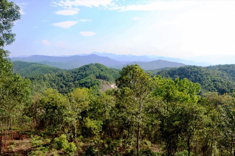 Để có được những cánh rừng xanh mướt là tất cả sự nỗ lực và cố gắng lớn