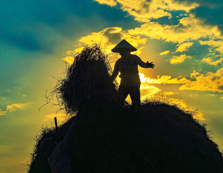 Khung giờ vàng chập tối đang là thời điểm hợp lí để người dân ra đồng