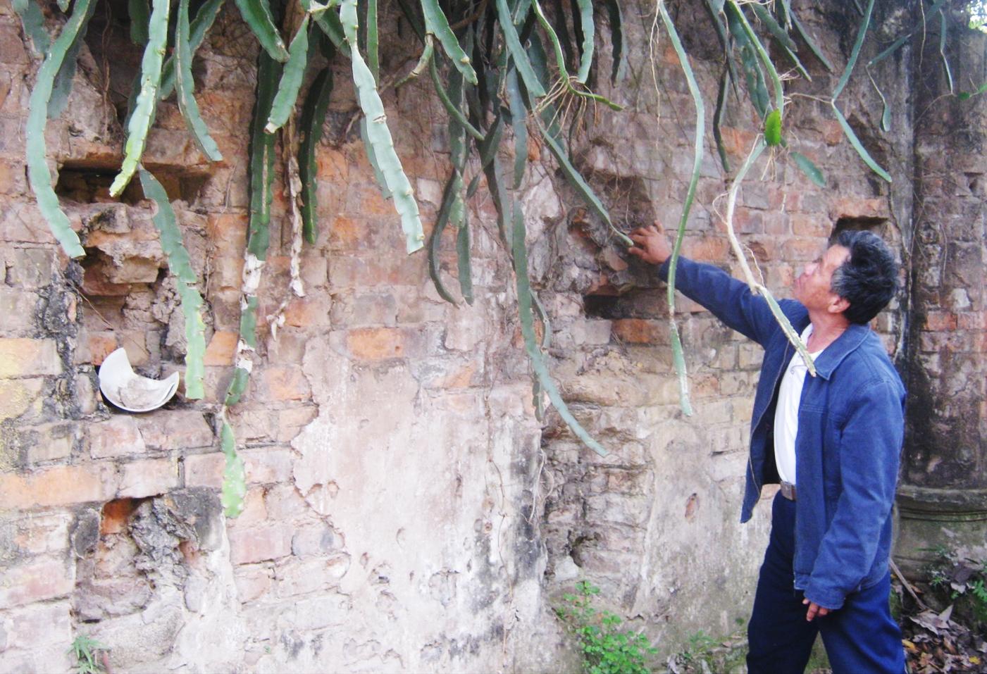 Những bức tường đổ nát của tòa biệt phủ