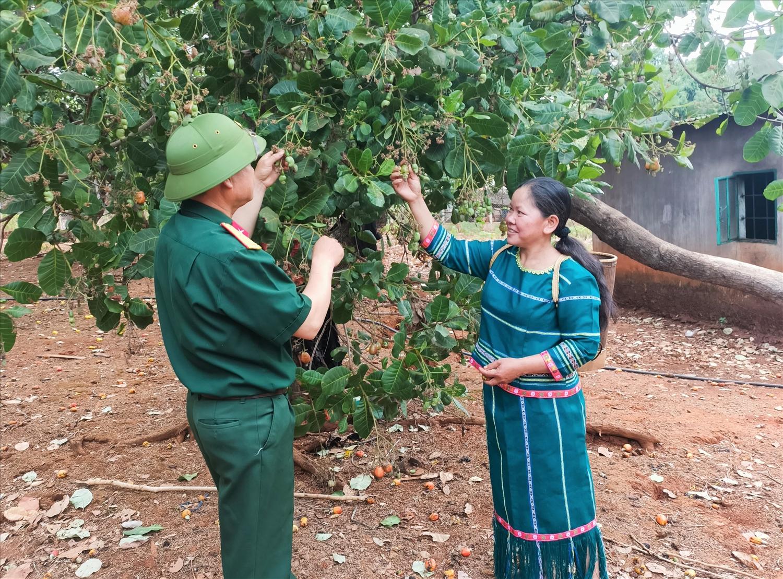 Chị Rơ Lan H'Blơn đang học hỏi thêm về kỹ thuật hái điều và chăm sóc điều từ Thiếu tá, Đội trưởng Trần Quốc Tuấn