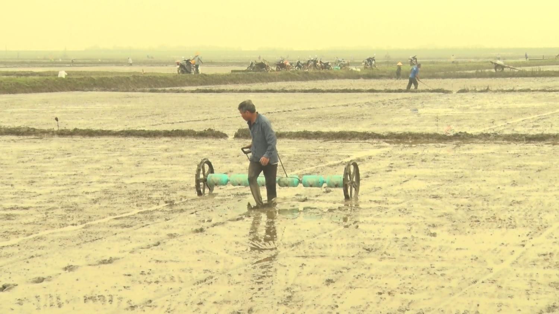 Nông dân huyện Triệu Phong (Quảng Trị) làm đất sản xuất hè thu