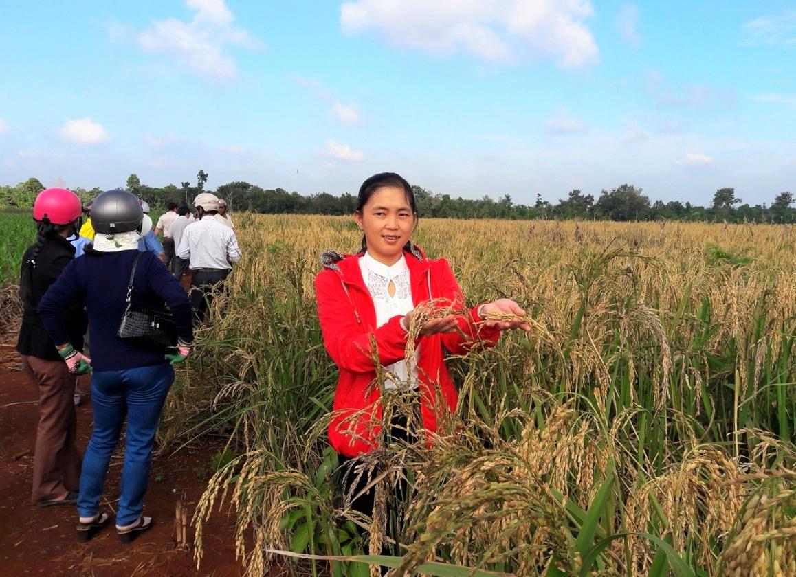 Chị Triệu Thị Châu tại Hội thảo đầu bờ mô hình lúa cạn ở xã xã Cư Suê, huyện Cư M'gar, tỉnh Đắk Lắk (Ảnh do nhân vật cung cấp)