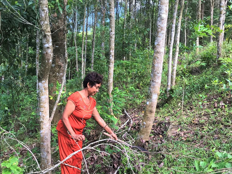 Chị Hồ Thị Hoa phát triển rừng trồng bời lời, mang lại nguồn thu nhập bền vững cho gia đình