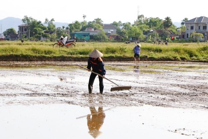 Nông dân huyện Đức Thọ (Hà Tĩnh) khẩn trương gieo cấy vụ hè thu