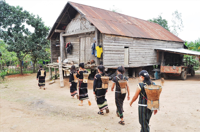 Nhà sàn dài truyền thống của đồng bào M'nông buôn Đắk Tuôr