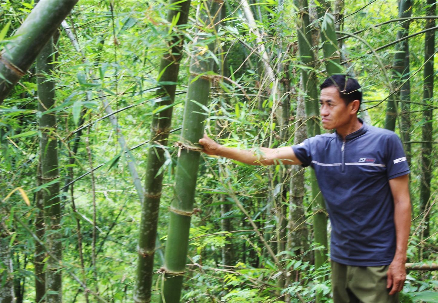 Nhiều hộ gia đình đồng bào DTTS ở vùng biên Quan Sơn thoát nghèo nhờ cây luồng