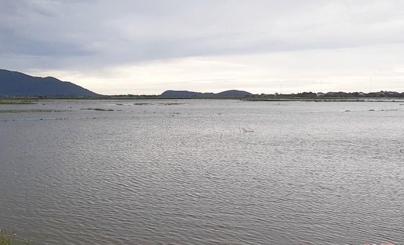 Những ruộng cây trồng vụ hè thu ở xã Thạch Hạ trở thành biển nước sau trận mưa đêm qua.