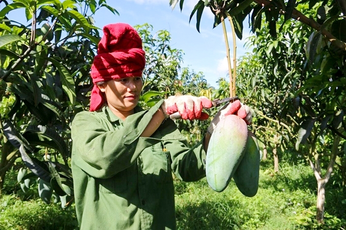 Người dân áp dụng khoa học kỹ thuật vào thâm canh, tăng năng suất cây trồng