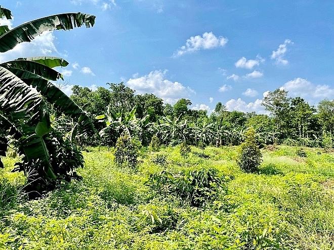 Những mảnh vườn rộng hàng ngàn m2 có giá từ 700 - 900 triệu đồng (Ảnh: Đ.V).