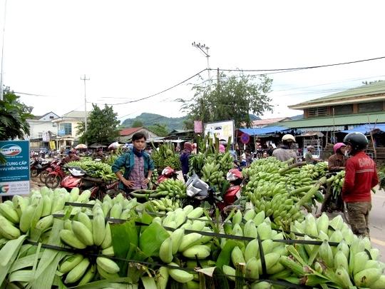 """Cây trồng chủ lực của huyện Hướng Hóa liệu có cần phải """"giải cứu""""?"""