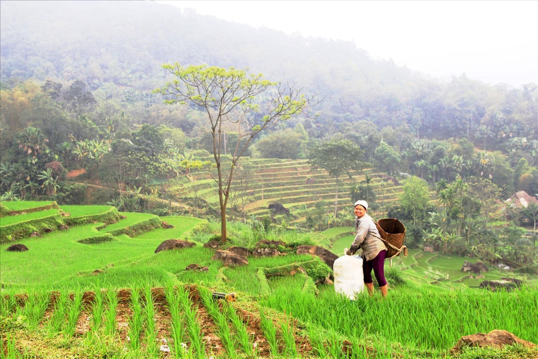 Diện tích trồng lúa quanh khu bảo tồn thiên nhiên Pù Luông không đủ nuôi sống người dân khiến họ túng thiếu quanh năm