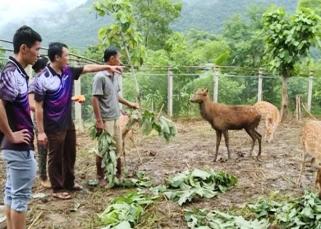 Người dân vùng đệm của khu bảo tồn thiên nhiên được hỗ trợ các mô hình phát triển trồng trọt, chăn nuôi