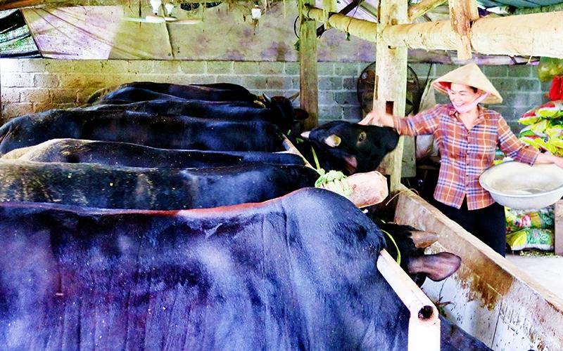 Mô hình nuôi bò 3B của đồng bào dân tộc Tày ở xã Tràng Xá, huyện Võ Nhai (Ảnh: Thế Bình).
