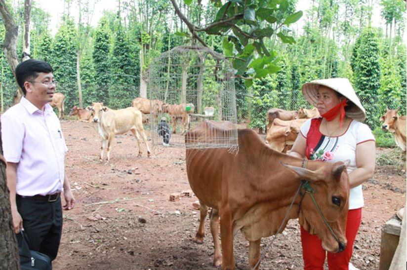 Chị Lê Thị Xuân giới thiệu về đàn bò của gia đình được chăn nuôi thành công từ nguồn vốn vay của NHCSXH. (Ảnh NV)