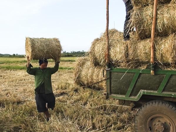 Anh Đào Văn Tâm đang thu hoạch rơm (Ảnh NV)