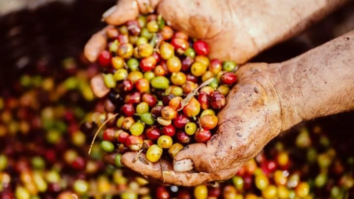 Giá cà phê tại thị trường trong nước đang giao dịch ở mức 35.300 - 36.200 đồng/kg.