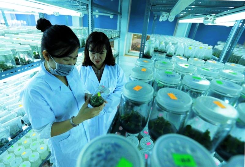 Công tác nghiên cứu khoa học, công nghệ trong nông nghiệp thời gian qua vẫn còn nhiều hạn chế